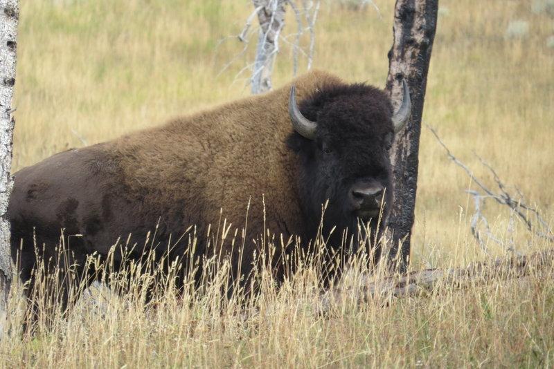 2013 Visit TAL Dept of Wyoming, Sept 21-25