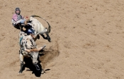 Keaton Mundy of Evansville, Wyo., is bucked from a bull during the Wyoming High School Rodeo finals in Douglas. Eldon Lindsay photo