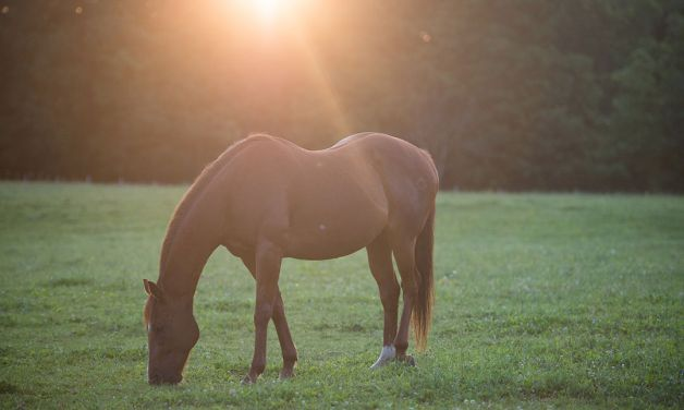 Thoroughbred therapy for veterans with PTSD