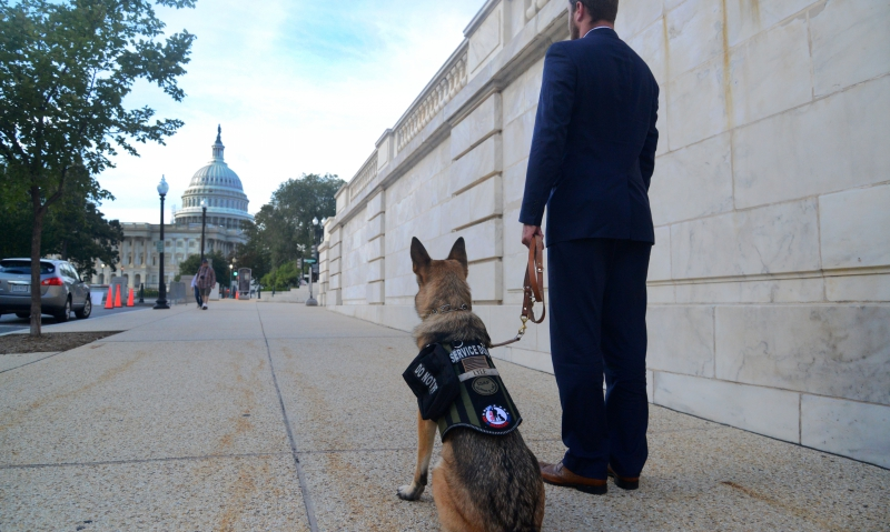 Marine veteran has his 'dog in the fight'
