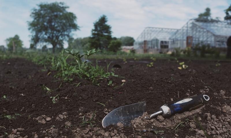 American Legion OCW grant supports vegetable garden for VA patients