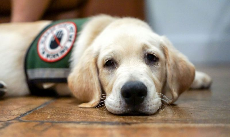 American Legion-backed PAWS Act heads to president's desk